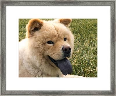 Chow Chow Framed Print