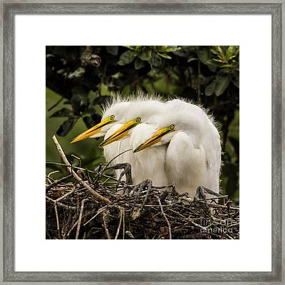 Chow Line Framed Print by Priscilla Burgers