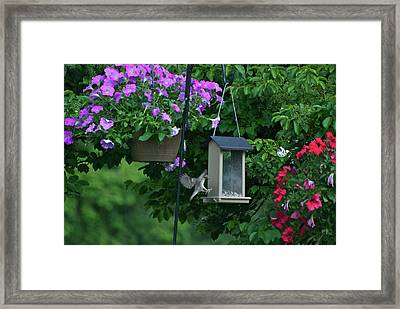 Framed Print featuring the photograph Chow Time For This Bird by Thomas Woolworth