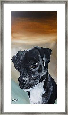 Chowder The Pug Rat Terrier Mix Framed Print by Michelle Iglesias