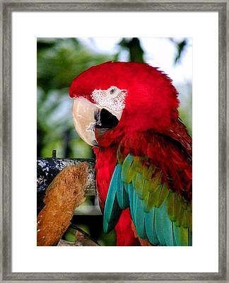 Chowtime Framed Print by Karen Wiles