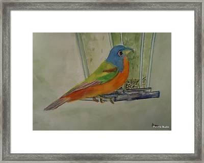 Chris' Birdfeeder Framed Print by Betty Pimm