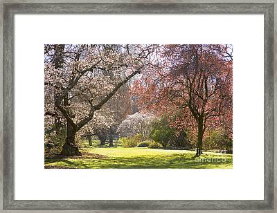 Christchurch Blossom In Hagley Park Framed Print by Colin and Linda McKie