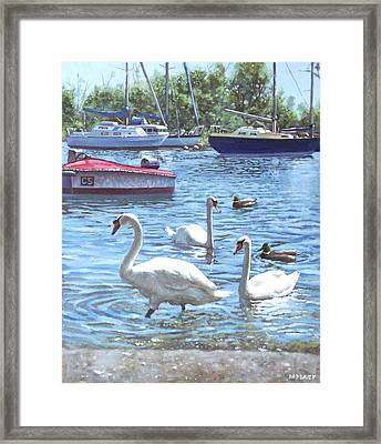 Christchurch Harbour Swans And Boats Framed Print by Martin Davey