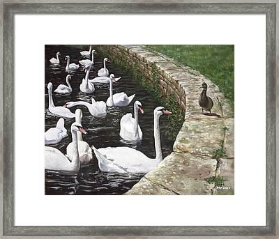 christchurch harbour swans with Mallard Duck conversation Framed Print by Martin Davey