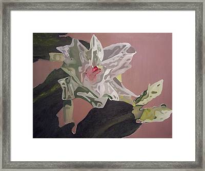 Christmas Bloom Framed Print by Claudia Goodell