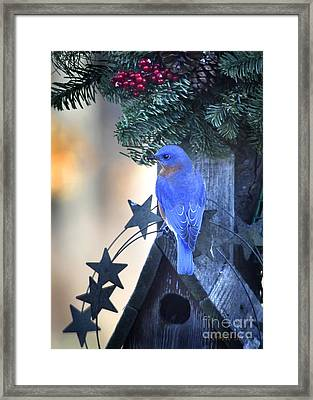 Christmas Bluebird Framed Print