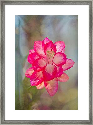 Framed Print featuring the photograph Christmas Cactus Bokeh by Jemmy Archer
