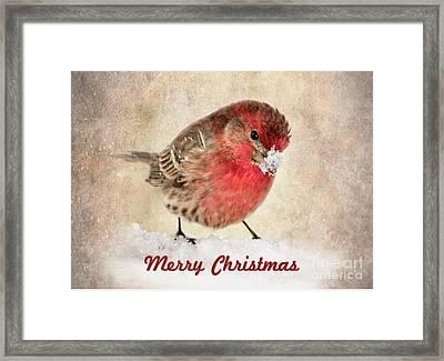 Christmas Card 8 Framed Print by Betty LaRue