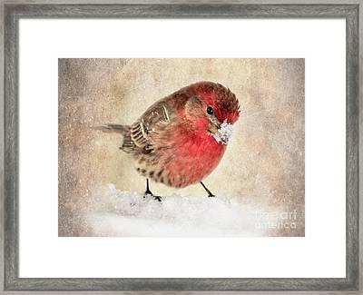 Christmas Card 9 Framed Print by Betty LaRue