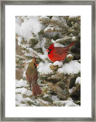 Christmas Card With Cardinals Framed Print