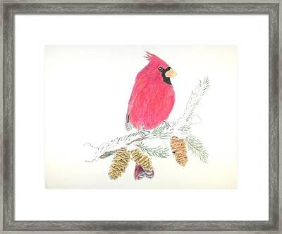 Christmas Cardnal Framed Print
