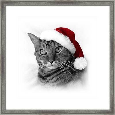 Christmas Cat 1 Framed Print