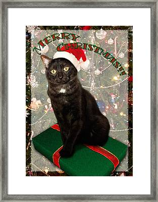 Christmas Cat Framed Print by Adam Romanowicz