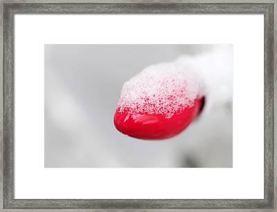 Christmas Chill Framed Print by Wanda Brandon