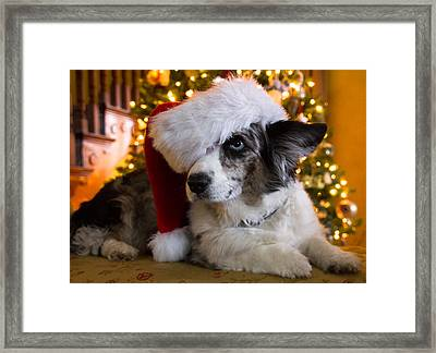 Christmas Corgi Framed Print by Cathy Donohoue