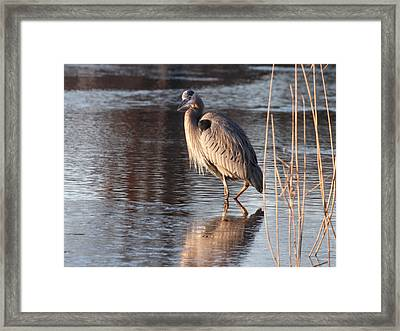 Christmas Day Greeting Framed Print