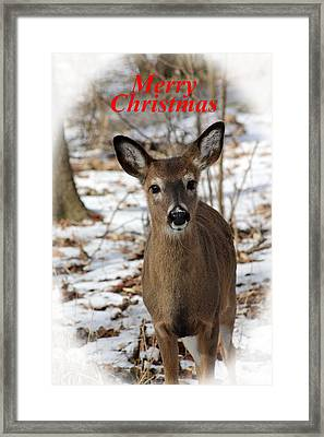 Christmas Deer Framed Print