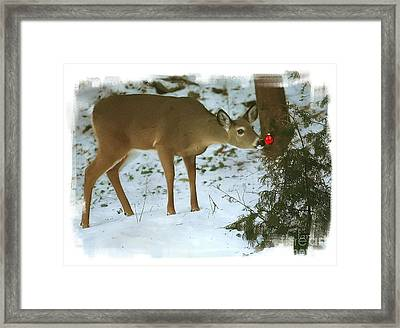 Framed Print featuring the photograph Christmas Doe by Clare VanderVeen