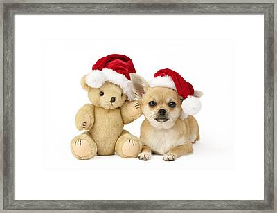 Christmas Dog And Teddy Framed Print
