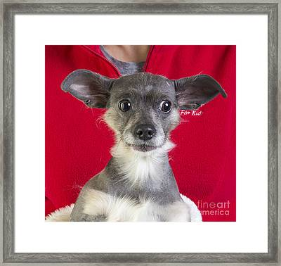 Christmas Dog Framed Print by Edward Fielding