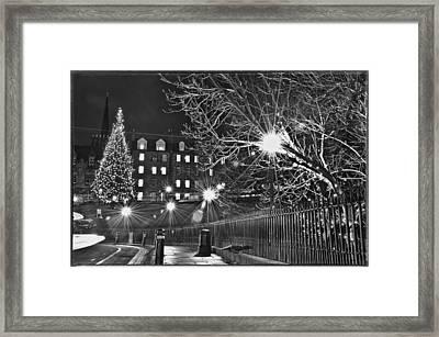 Christmas Fir Framed Print