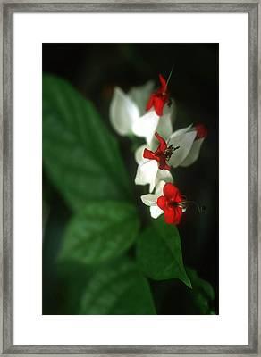 Christmas Flora Framed Print