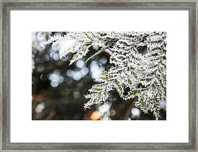 Framed Print featuring the photograph Christmas Frost by David Isaacson
