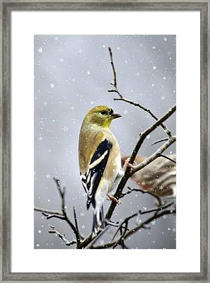 Christmas Goldfinch Framed Print