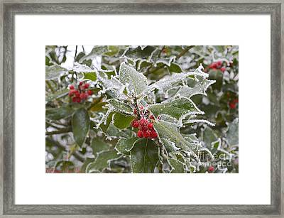 Christmas Greetings Framed Print by Felicia Tica