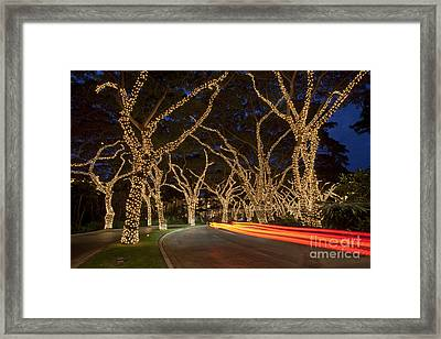 Christmas In Wailea Framed Print