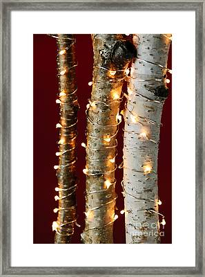 Christmas Lights On Birch Branches Framed Print by Elena Elisseeva