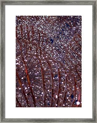 Christmas Lights Framed Print by Valentino Visentini