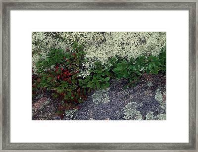 Christmas Moss Framed Print