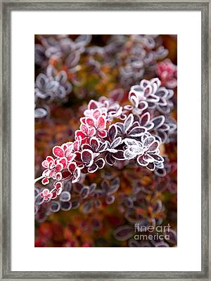 Christmas On A Branch Framed Print