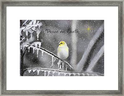 Christmas Peace Framed Print