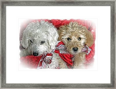 Christmas Puppy Framed Print