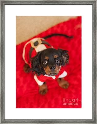 Christmas Puppy Framed Print by Kay Pickens