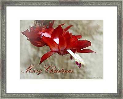 Christmas Red Beauty Card Framed Print by Pete Trenholm