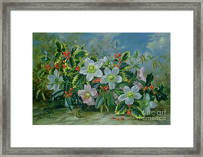 Christmas Roses And Holly Framed Print