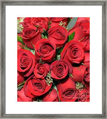 Red Red  Roses Framed Print
