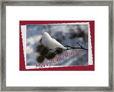 Christmas Snow Bird Framed Print