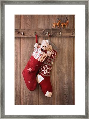 Christmas Stockings Framed Print by Amanda Elwell