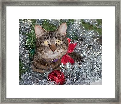 Christmas Tabby Framed Print