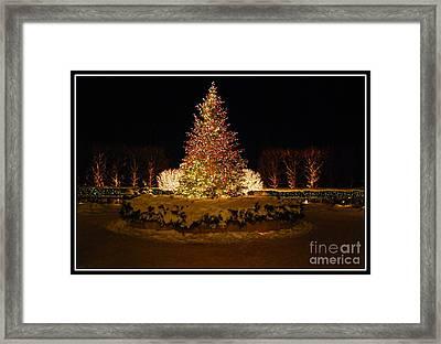 Christmas Tree At Chicago Botanic Garden Framed Print by Nancy Mueller