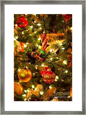 Christmas Tree Background Framed Print by Elena Elisseeva