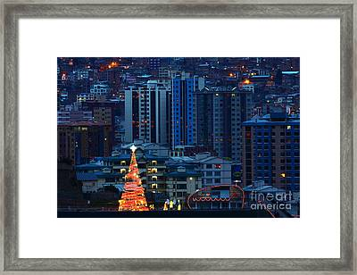 Christmas Tree In La Paz Framed Print by James Brunker