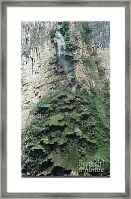Christmas Tree Waterfall Framed Print