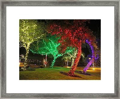 Christmas Trees Framed Print by Sergey  Nassyrov