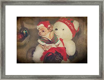 Christmas Zoe Framed Print by Laurie Search